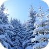 冬の自然音