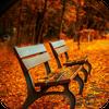 秋の自然音